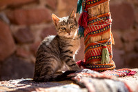 kitten at Bedouin camp, St. Catherine's, Sinai Peninsula